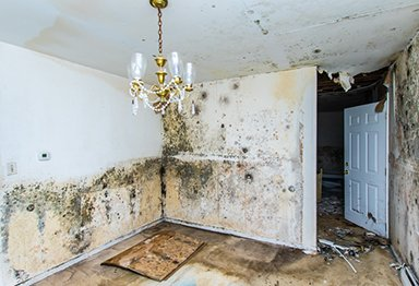 Mold damage in a home