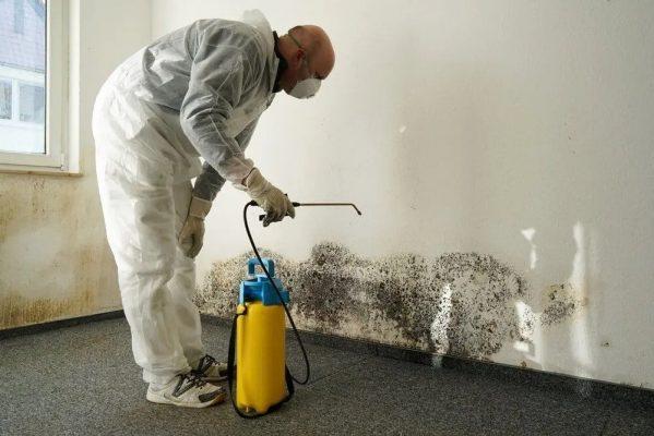 mold removal service redmond washington